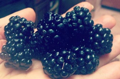 blackberries on my hanad 2014
