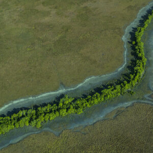 This image of a dark green river of mangroves snakes across a vibrant green floodplain was taken from a light aircraft over the Top End region of the Northern Territory, Australia.
