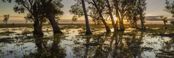 This image was taken at the edge of the Mary River Flood Plains in the Top End of the Northern Territory, Australia