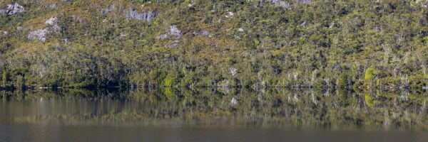 A still morning on Dove lake with the western shore line a prefect reflection