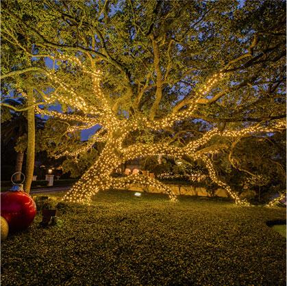 Full Moon Christmas Light Installation St Simons Island GA Outdoor Tree