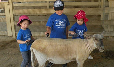 Kids with Sheep in petting zoo