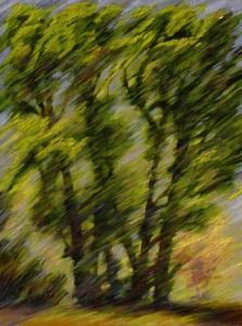 """Cottonwood Oblique #1, 18"""" x 24"""""""
