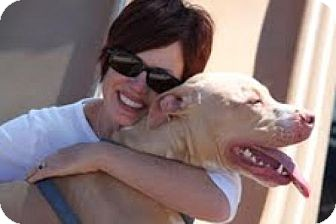 CONSIDERING A PET SITTER?