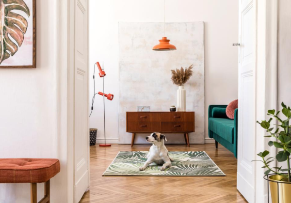 8 Best Home Upgrades for Pet-Friendly Households
