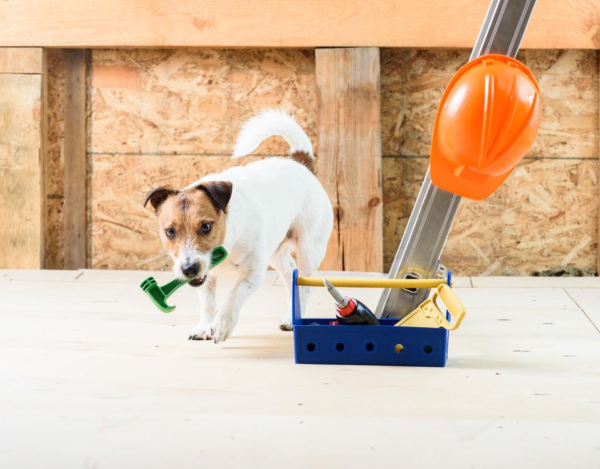 Keeping Your Pets Safe During a Remodel: 6 Things to Keep in Mind