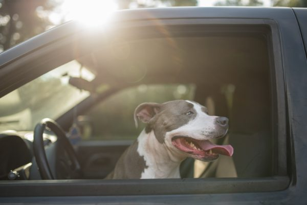 Safe Traveling Tips with Your Dog in Your Truck