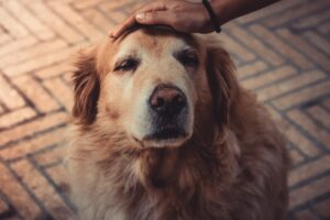 Budget-Friendly Guide to Caring for Your Animal Companion as He Ages