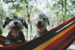 Top Dog Festivals Across the Globe