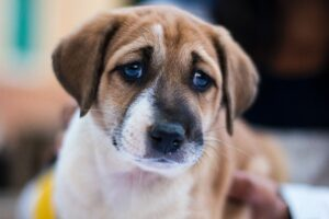 How Can Household Mold Affect Your Dog's Health?