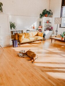 Can Your Dog Eat Off the Floor? Top Cleanliness Tips for Dog Owners