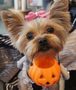 A Dog Safe Halloween is a Happy Halloween