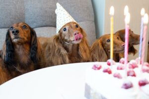 """Throwing A """"Gotcha"""" Birthday Party For Your Dog"""