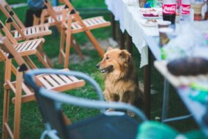 A Guide To Keeping Dogs Safe At A Barbecue Party