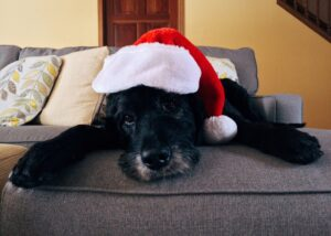 How to Take Holiday Perfect Pet Pictures to Post on Social Media