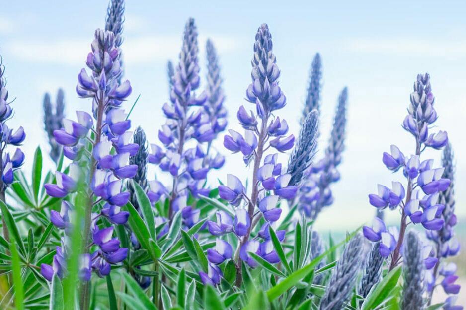 Wyoming Wildflower Guide