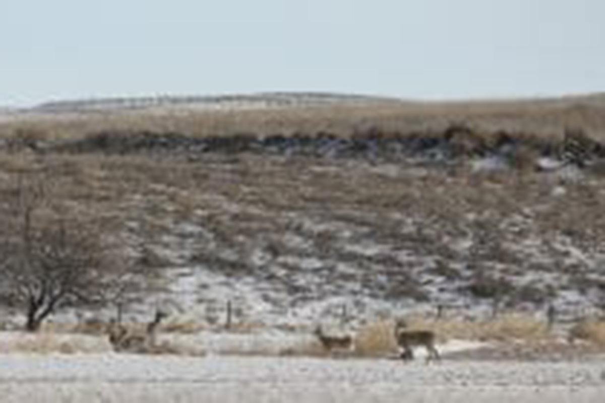 Deer Haven