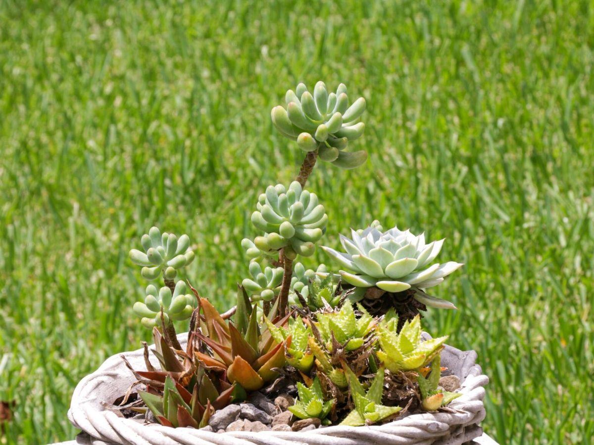 houston piney point garden tellepsen pot