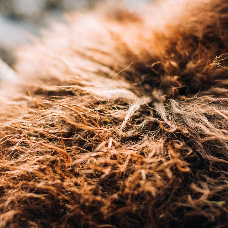 Grassroots Bison Hides