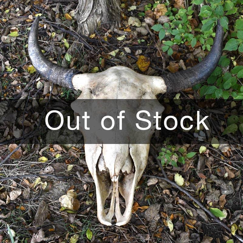 Grassroots Bison Skull