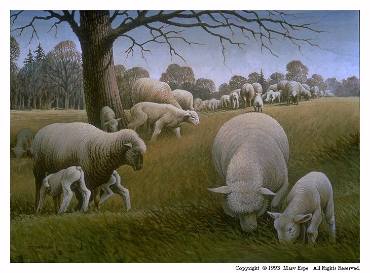 Safely Grazing is a 22 x 30 inches original acrylics landscape painting by Marv Espe, depicting a flock of sheep safely grazing in an idyllic pasture.