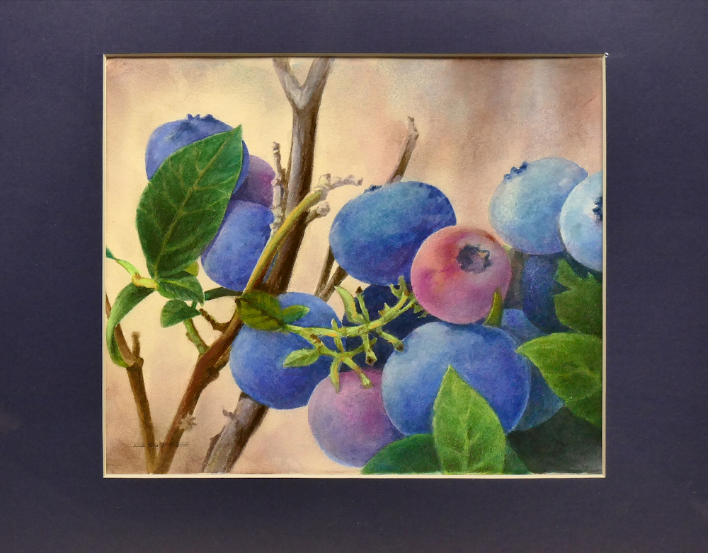 Bayfield Blueberries is an original 8 x 10 inches water color still life painting © 2016 Marv Espe. Ripening blueberries on the vine with green leaves.