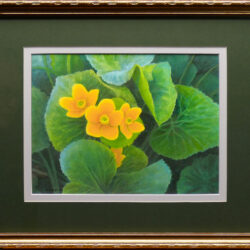 Buttercups is an original 11 x 14 inches water color still life painting © 2016 Marv Espe. Yellow buttercup flower blossoms and green leaves.