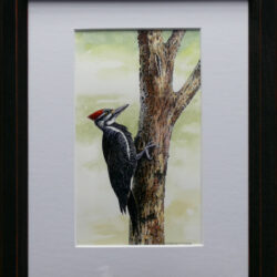 Pileated Woodpecker is an original 10 x 8 inches mixed media wildlife painting © 2016 Marv Espe. A pileated woodpecker on a tree trunk.