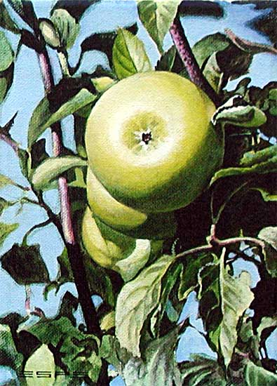 Green Apples is an original 7 x 5 inches acrylics nature painting © 2000 Marv Espe. Green Apples on the branch along with green leaves and blue sky.