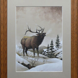 Bugling Bull is an original 14 x 10 inches mixed media wildlife painting © 2014 Marv Espe. Winter scene with a bull elk in the snow.