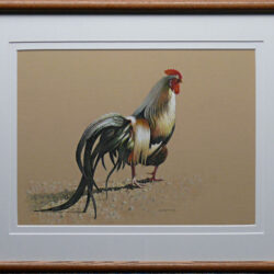 Cocky Cockerel is an original 12 x 15 inches mixed media animal painting © 2011 Marv Espe. Portrait of a single rooster is isolated on tan stock. Framed.
