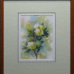 Hydrangeas is an original 9 x 6.5 inches water color still life painting © 2007 Marv Espe. Several white and green flower blossoms. Framed.