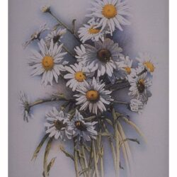 Daises is a 175 x 11 inches lithograph print © 1988 by Marv Espe, depicting beautiful white and yellow flowers.