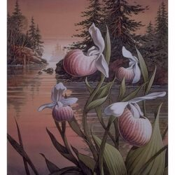 Inlet Moccasins is a 14½ x 10¾ inches lithograph print © 1992 by Marv Espe. Beautiful showy lady slipper wild flowers with a Minnesota lake scene in the background.
