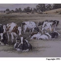 In Green Pastures is a 9.75 x 22 inches lithograph print of pen & ink w/ watercolor & acrylics © 1993 Marv Espe. A herd of black and white cows in a farm pasture.