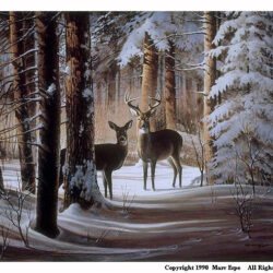 Encounter is a 15 x 20 inches lithograph print of acrylics © 1990 Marv Espe. A buck and a doe white tailed deer standing in the winter snow in the forest.