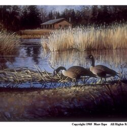 Goose Lagoon is a 15 x 19 inches lithograph print of acrylics © 1985 Marv Espe. Two Canada Geese at the edge of a pond with a cabin in the distance.