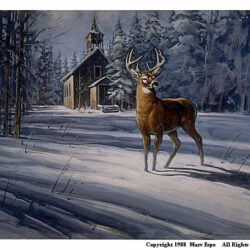Penturen Buck is a 15 x 20 inches lithograph print of acrylics © 1988 Marv Espe. A large white tailed deer buck stands in the snow with an old church in the background in this forest scene.