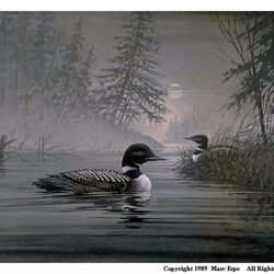 Loon's Cove is a 15 x 20 inches lithograph print of acrylics © 1989 Marv Espe. Two common loons in a beautiful Minnesota lake landscape with the moon visible through the fog.
