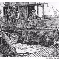 Fishin' is a 9 x 13 inches lithograph print of pen & ink © 1985 Marv Espe. Seveeral men working at commercial fishing with a net full of fish.