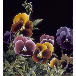 Yellow Pansies is a 11 x 8.25 inches lithograph floral print © 1996 by Marv Espe, of beautiful flowers on a back blackground.