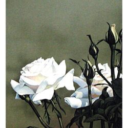 Rose Buds with White is a 7 x 9.5 inches lithograph print © 2000 Marv Espe. Beautiful white rose blossoms with buds.