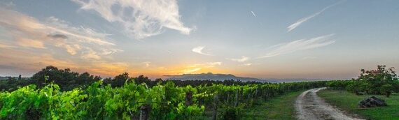 Combining Solar panels with efficient energy use improves wineries bottom-lines