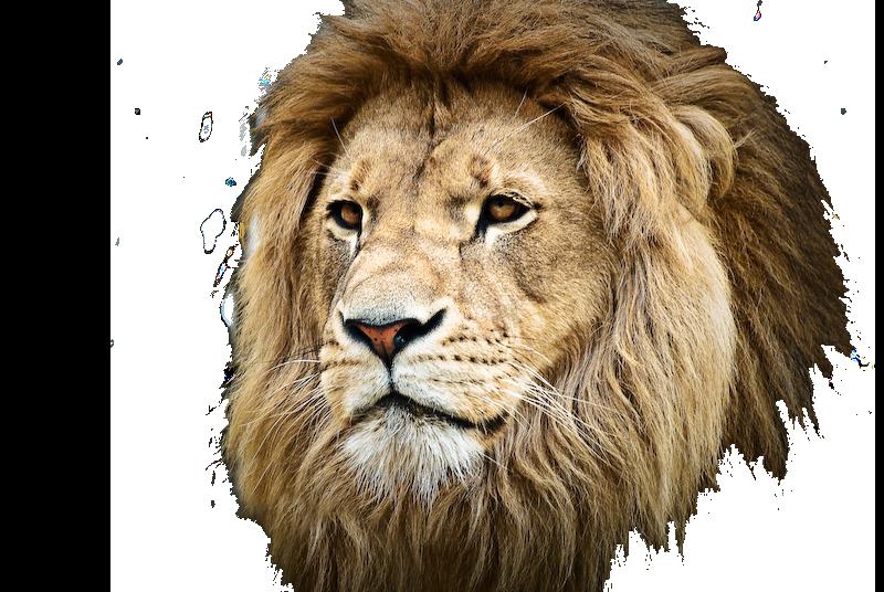 mlc_lionhead_transparent
