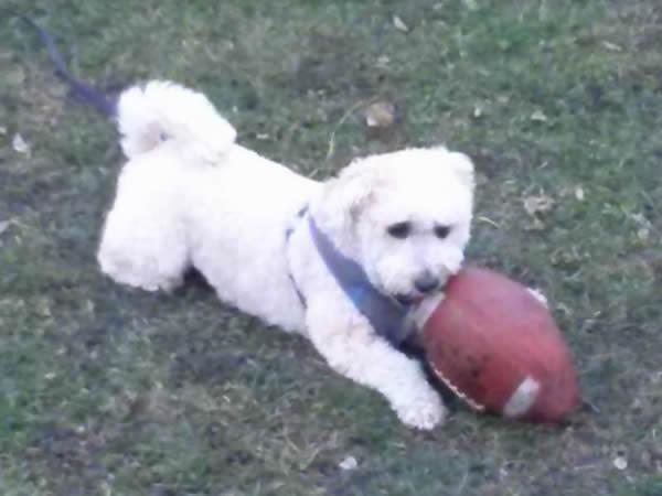 Ringo Playing Football