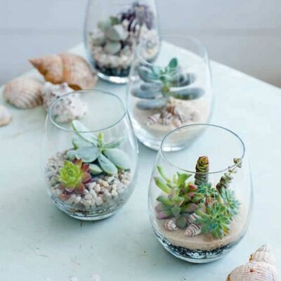 Make Your Own Terrarium Party