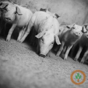Nebraska Pork Producers Association Develops 'On Farm Leadership Program'