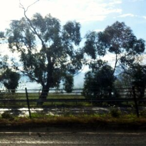 Princes Highway duplication contracts awarded