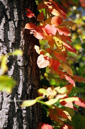 Leaf-peeping by Bike