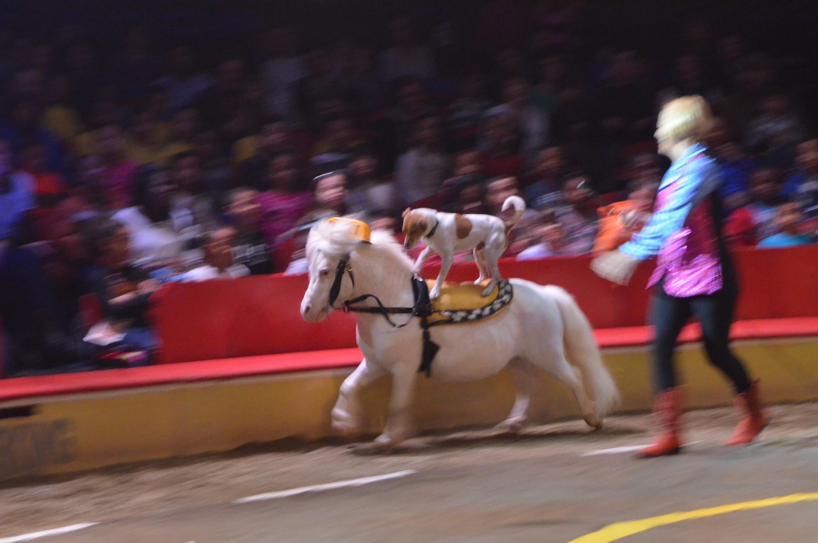 Circus: New York vs Moscow
